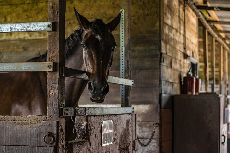 If you run an equestrian centre, the invoicing & accounting can be easy with Debitoor